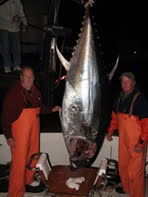 Offshore Pursuits Bluefin Tuna News